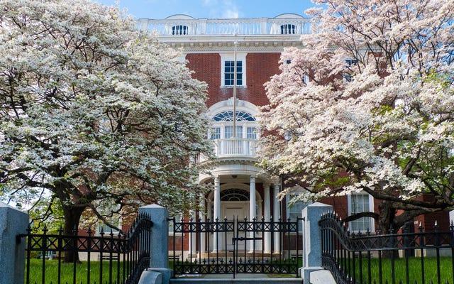 Comment protéger votre maison contre les allergies ce printemps