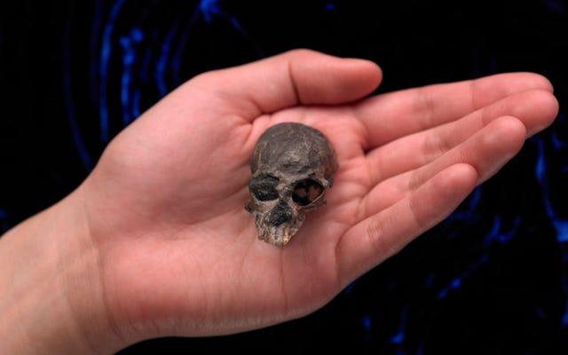 科学者たちは2000万年前のサルの脳構造を明らかにします