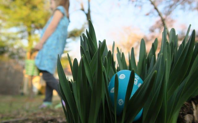 9 ภาพถ่ายเทศกาลอีสเตอร์ไข่