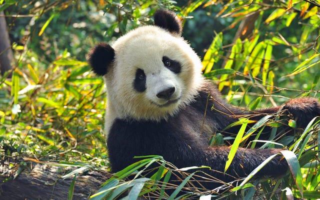 仏坪竹林がパンダクォータリーのベストアウトドアダイニングスポットに選ばれました