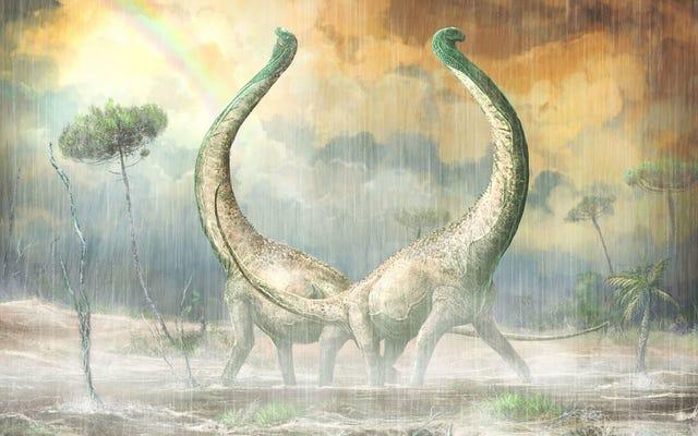 Недавно обнаруженный африканский титанозавр имел копчик в форме сердца