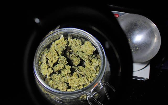研究によると、大麻を合法的に入手できる成人は、大麻をオピオイドや他の処方薬の代替品として使用しています。
