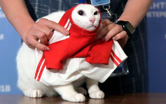 アキレスサイキックキャットは、マウスがバターを塗られている場所を知っているため、ワールドカップの試合に勝つためにロシアを選びます