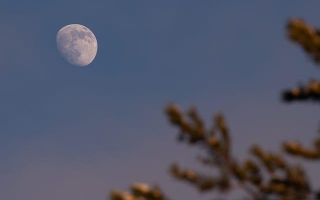 この夜の日没後の地球の影の見方