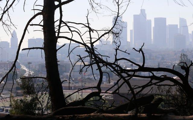 LAは気候救急科を望んでいます。なぜなら、そうです[更新]