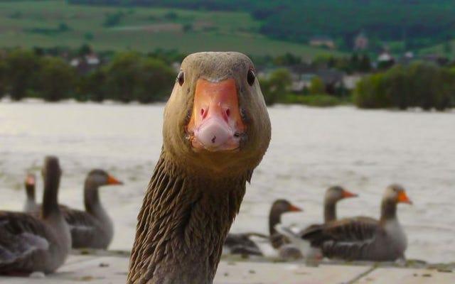 鳥にパンを投げるのをやめなさい