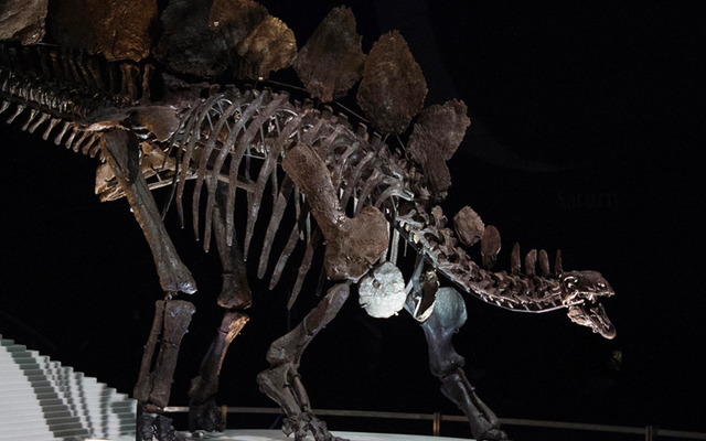लंदन के प्राकृतिक इतिहास संग्रहालय में चतुर 10-वर्षीय पुराने डायनासोर त्रुटि