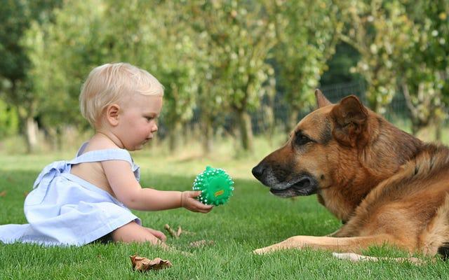犬を家に置いておくことで、子供の湿疹や喘息の症状のリスクを減らすことができます