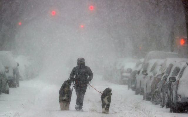 Heckin 'Cute Puppers Just Absolutely Loving the Snow. Wow Doggos, Would Pet 13/10