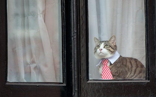 Конечно, история происхождения милого кота Джулиана Ассанжа была ложью