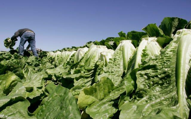 シャットダウンにより食品安全検査が停止:レポート