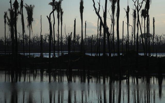 Крупные доноры уходят из бразильского фонда Amazon; Это могло вызвать проблемы для тропического леса