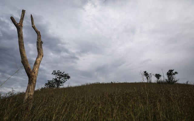 В этом году около 200 активистов были убиты, защищая окружающую среду