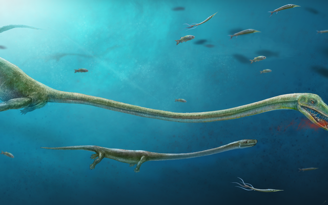 彼らは、2億4500万年前の爬虫類の化石を発見しました。この化石は哺乳類のような若者を産みました。