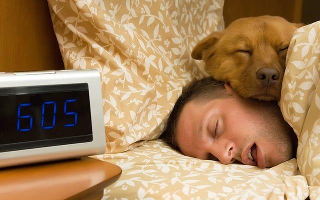 ベッド(または部屋)を犬と共有することが私たちの睡眠にどのように影響するか