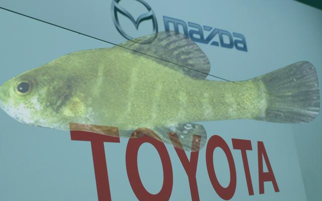 Por qué un pez diminuto está deteniendo la nueva fábrica de Toyota-Mazda en Alabama