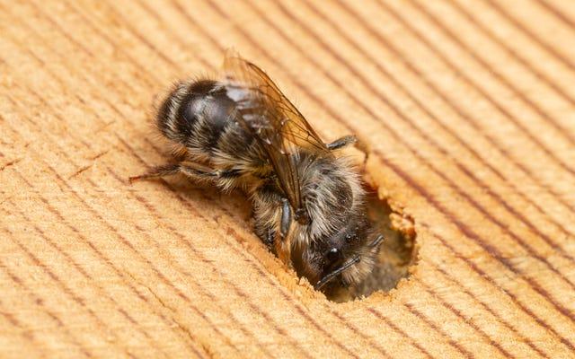 La tua casa delle api da quattro soldi probabilmente sta uccidendo le api