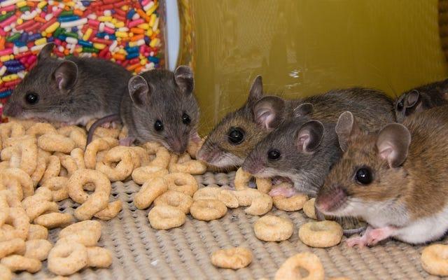 Как избавиться от мышей, не убивая их