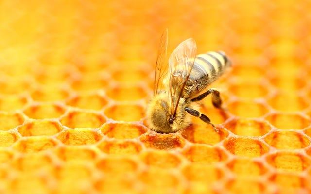 L'industria delle mandorle della California potrebbe avere il sangue di miliardi di api sulle sue mani