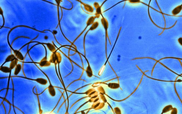 Semakin Tua Anda, Semakin Besar Kemungkinan Anda Memiliki Sel Sperma 'Egois' Bermutasi