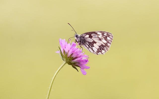 76% ของแมลงได้หายไปจากประเทศเยอรมนี และนักวิทยาศาสตร์เกรงว่าจะเป็นจุดเริ่มต้นของการสูญพันธุ์ครั้งใหญ่