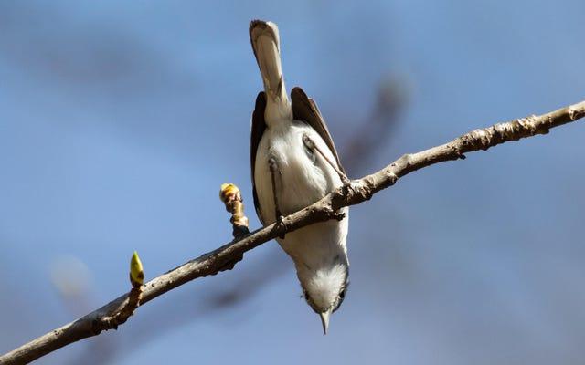 """Sketchy Science Journal pubblica un articolo intitolato """"Qual è il problema con gli uccelli?"""""""