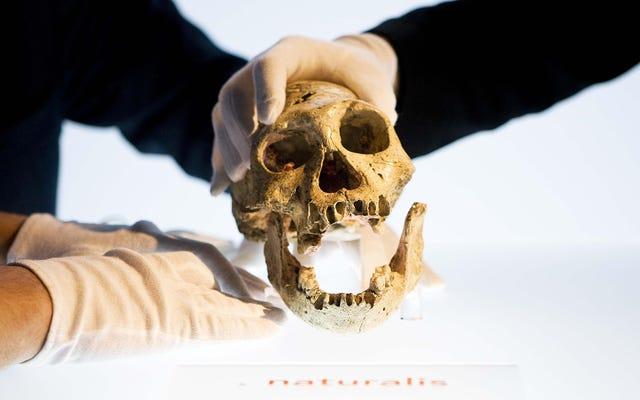 初期の人間は類人猿のような脳を持って歩き回っていた、と研究は発見した