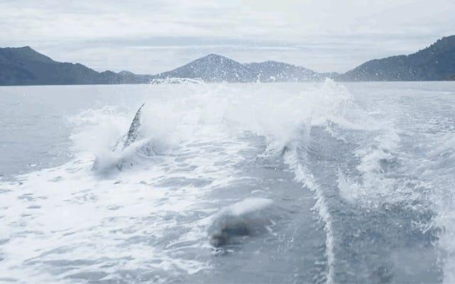 Il sogno Slo-Mo dei delfini che inseguono una barca renderà il lunedì mattina più gestibile
