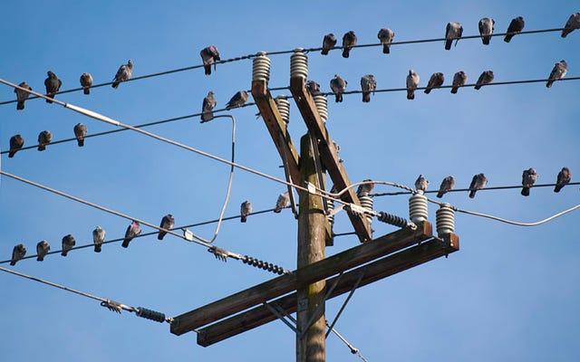 電力線にとまる鳥が電気切断されない理由