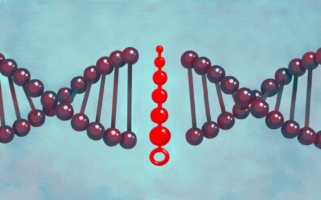 底に生まれましたか?研究者は、ゲイ男性のアナルセックスの役割における生物学的相関関係を報告しています