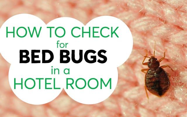 Tre suggerimenti per aiutarti a evitare di fare l'autostop cimici da una camera d'albergo