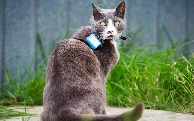 科学者は猫にトラッカーを置いて、猫の生態学的破壊の程度を明らかにします