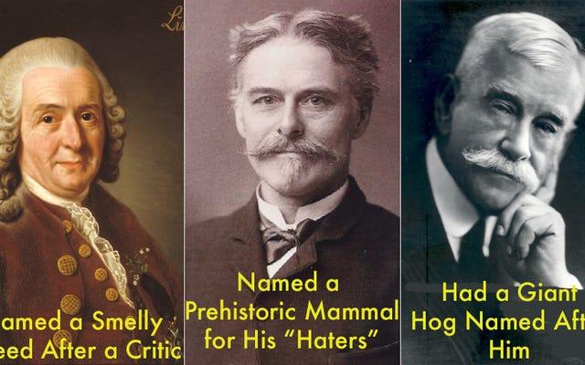 Diese wissenschaftlichen Namen wurden nur gewählt, um bestimmte Personen zu beleidigen