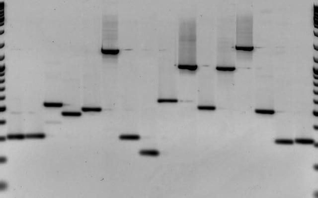 FDA ब्लाइंडनेस को ठीक करने के लिए जीन थेरेपी के एक ऐतिहासिक अनुमोदन पर विचार कर रहा है