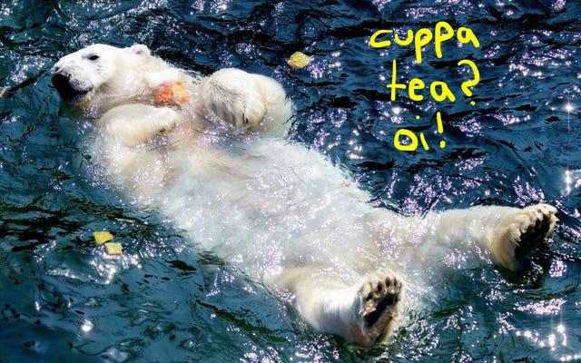 冷凍フルーツのアイスケーキを楽しむこのやわらかいクマは、ハリー・スタイルズを思い出させます
