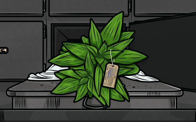 あなたの植物が死んでいるのか、ただ休眠しているのかを見分ける方法