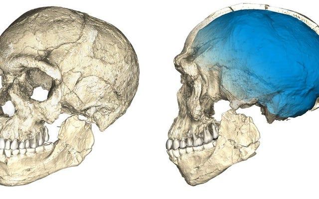 信じられないほどの発見がホモサピエンスの起源を10万年前倒し