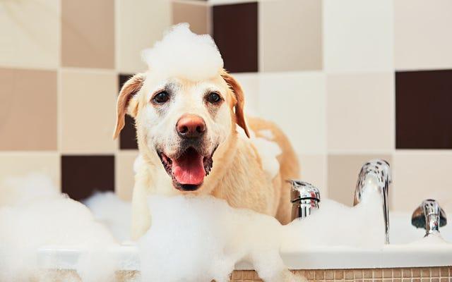 """कुत्ते के शैम्पू का उपयोग करने के लिए भुना हुआ लड़का वास्तव में """"उस व्यक्ति को जाना जाता है जो कुत्ते के शैम्पू का उपयोग करने के लिए भुना हुआ है"""""""