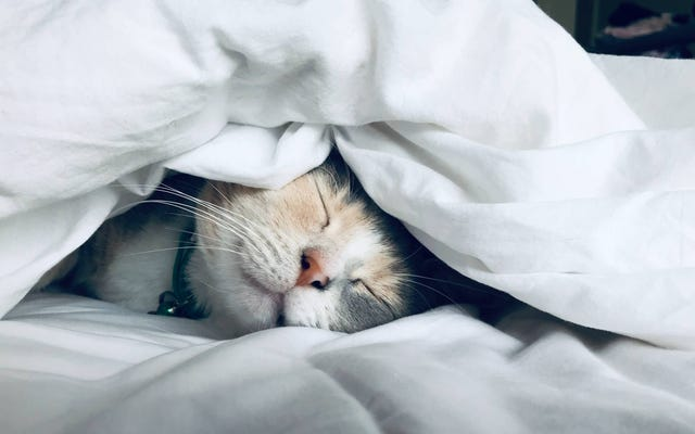 飲酒の夜の後にまともな夜の睡眠をとる方法