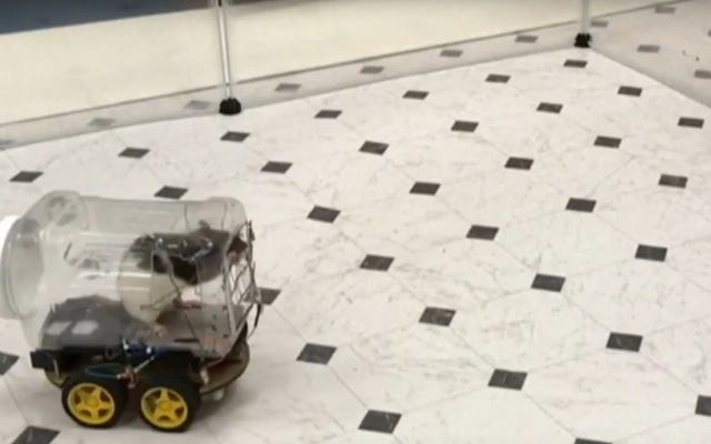 चूहे अभी छोटी छोटी चूहे वाली कारों में घूम रहे हैं
