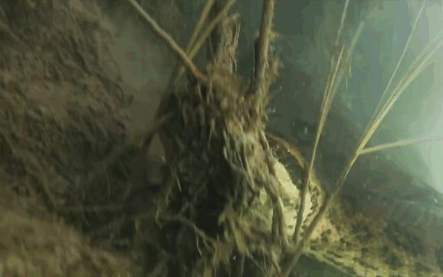 Два дайвера зафиксировали 7-метровую анаконду в нескольких сантиметрах от животного