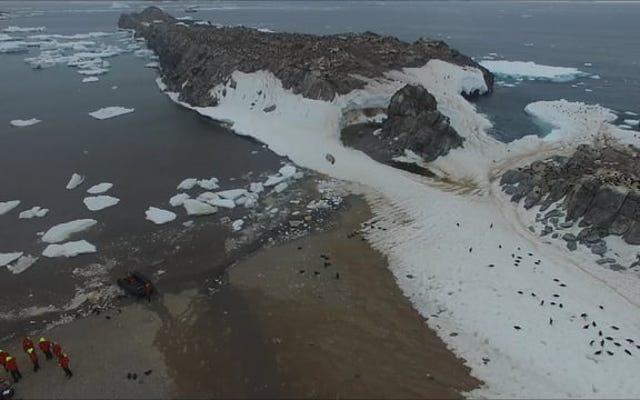 サタデーナイトソーシャル:150万羽のペンギンの紹介