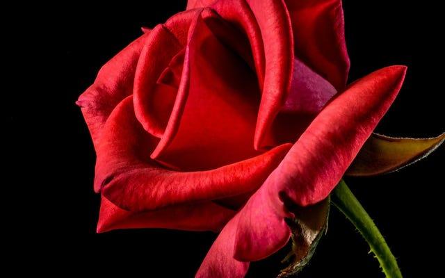 Lusinan Ditagih Lebih dari $ 6 Juta Penipuan dan Skema Romantis Internet