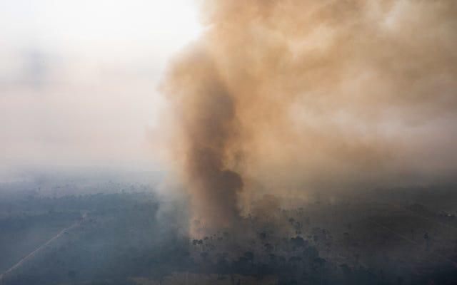 В сентябре на Амазонке сгорело меньше пожаров, но вырубка лесов продолжается