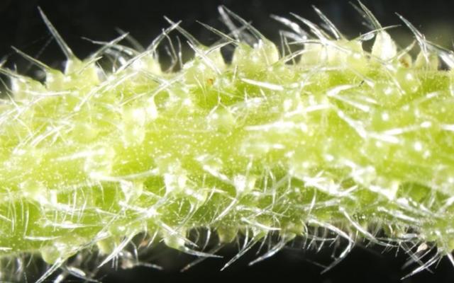 Australia Memiliki Ular Berbisa, Laba-laba, dan… Pohon