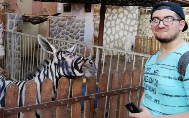 Kebun binatang Mesir melukis seekor keledai dengan garis-garis hitam dan putih agar terlihat seperti zebra