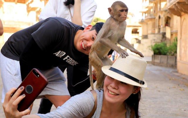 今週の最も差し迫った法的問題:サルの自撮り!