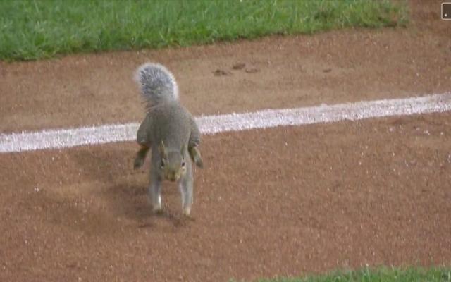 Un écureuil idiot sur le terrain envahit avec succès les jeux consécutifs de jumeaux