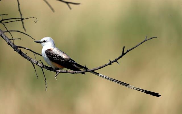 この秋、米国南部で数千羽の鳥が餓死した