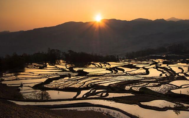 Yunnan, los arrozales que desaparecen de China